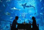 """巴黎建造世界首个""""水下卧室"""" 住客与鲨鱼同眠"""